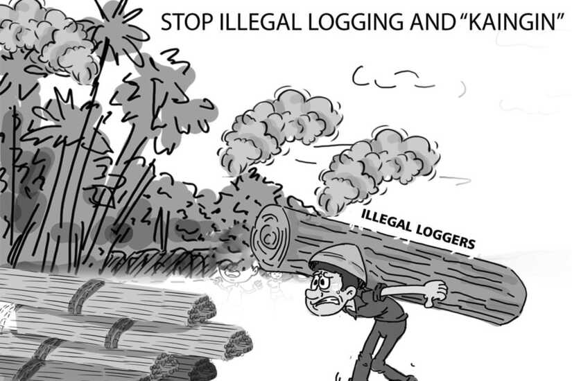 Illegal Loggers